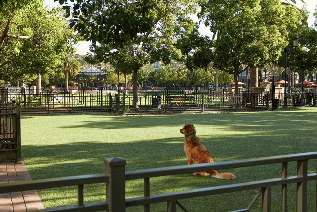 Dog Park at The Park at Irvine Spectrum